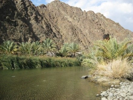 oasis, wadi, palm trees, creek, hills, mountain, desert stream